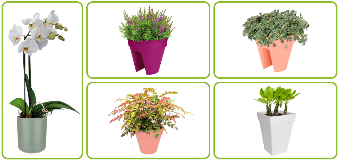 Creating custom made potplant combinations (Amazon)